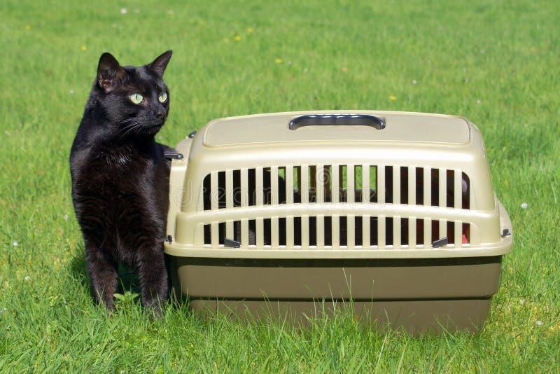 黑匣子猫新其正义的寿命  库存图片
