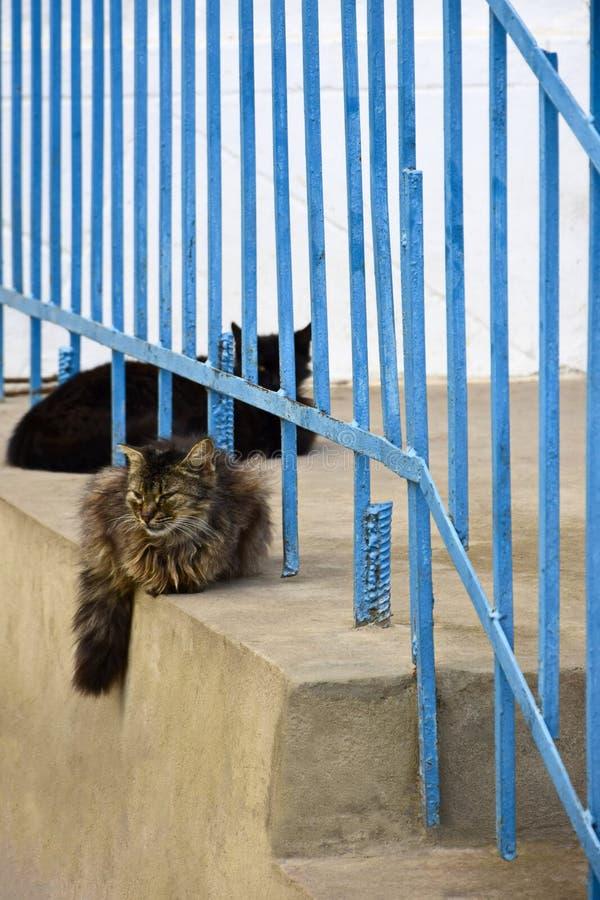 黑和多彩多姿的着色两只猫休息 图库摄影