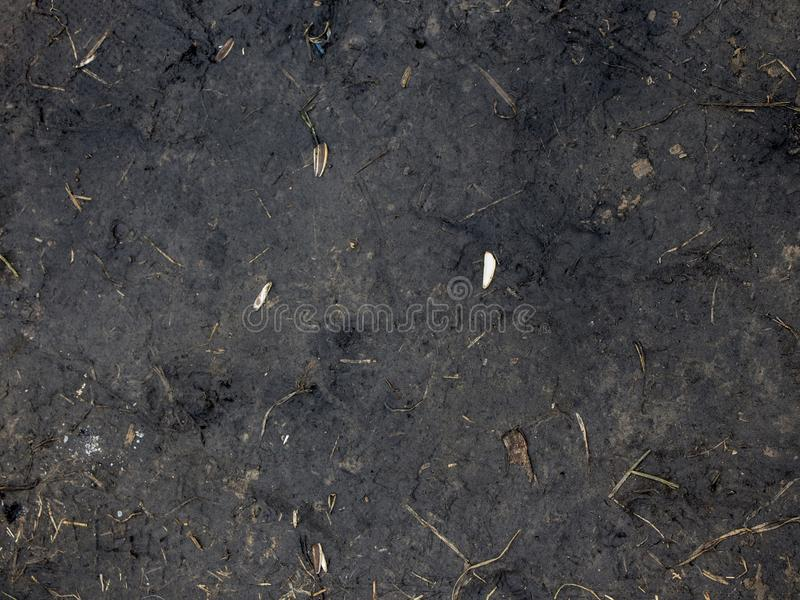 黑土壤土背景纹理,自然样式 地面,自然 免版税库存图片