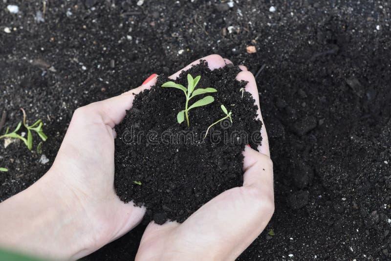 黑土壤在年轻逃命的手上 免版税图库摄影