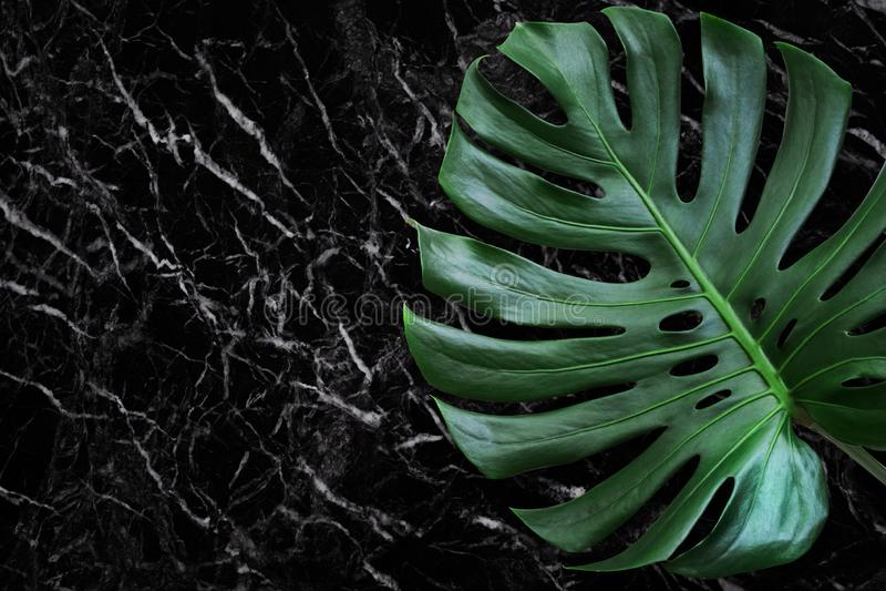 黑大理石石头美好的纹理与monstera叶子的 免版税库存照片