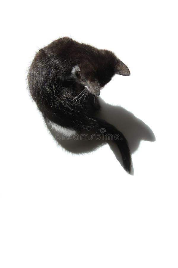 黑小猫和他的阴影在白色背景 库存图片