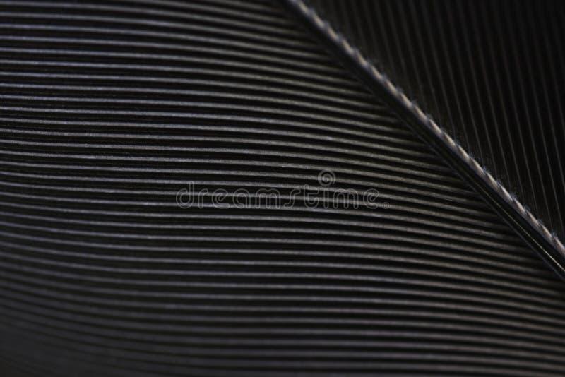 黑掠夺羽毛宏观纹理特写镜头 库存照片
