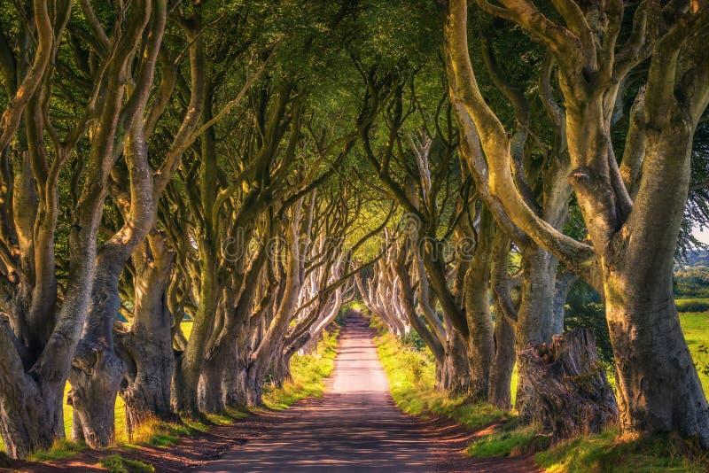 黑暗树篱在日落的北爱尔兰 免版税图库摄影