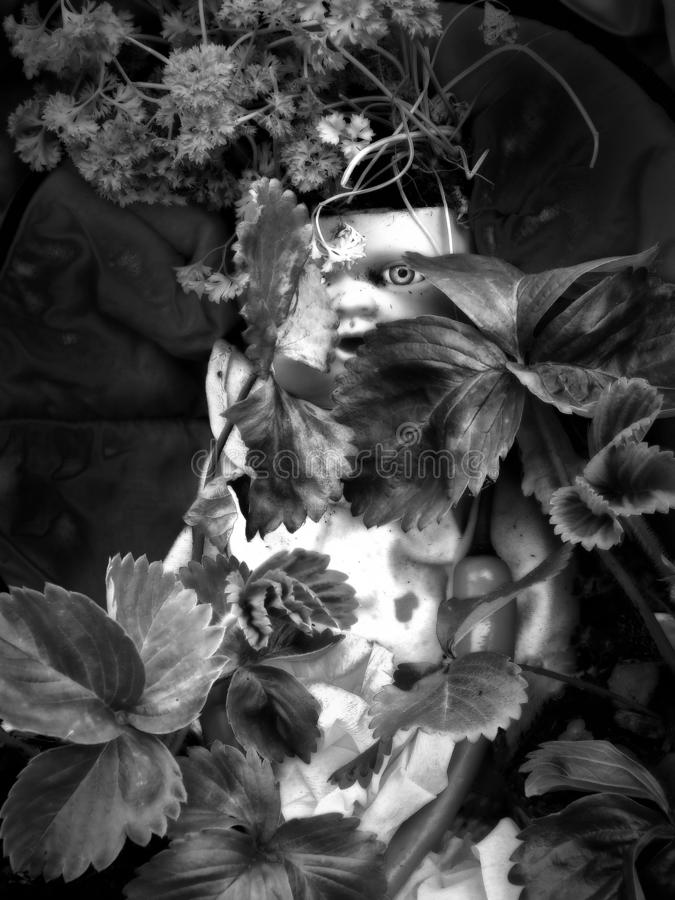 黑暗的单色哥特式图象与凝视通过叶子和植物的一只蠕动的可怕眼睛的一个老肮脏的葡萄酒娃娃黑暗的 免版税库存图片