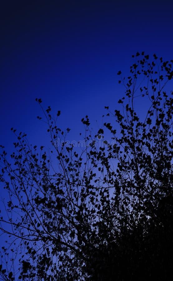 黑暗的夜空分支和叶子前面  为文本留出的空间 库存照片