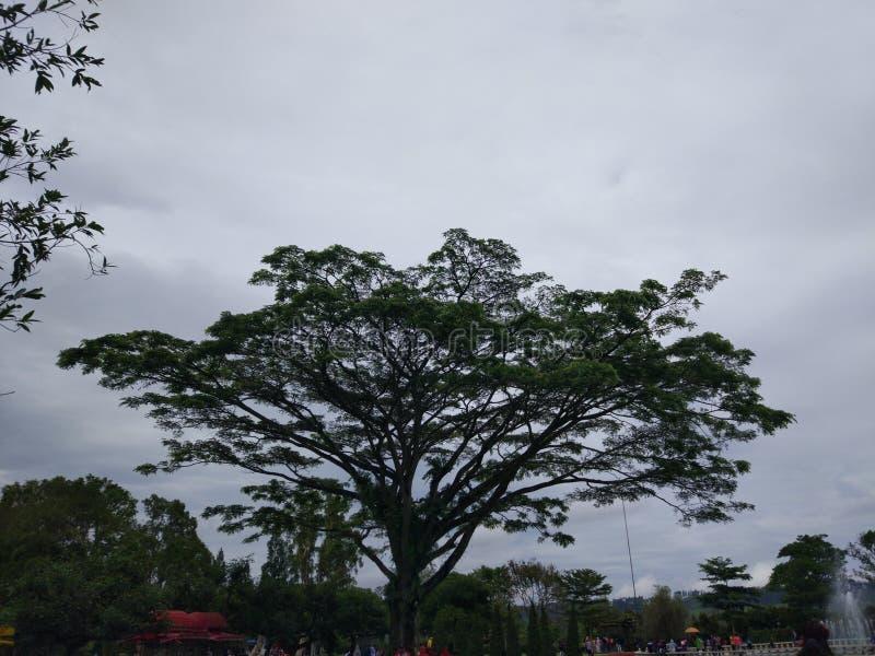 黑暗的巨型树 库存图片