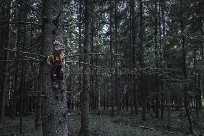 黑暗的森林和一个稻草人在一棵干树图片
