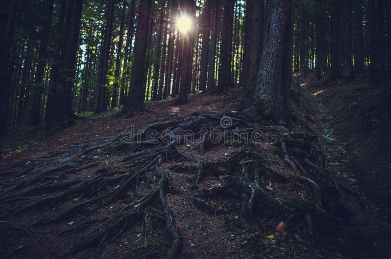 黑暗的森林和光亮的太阳 免版税库存图片