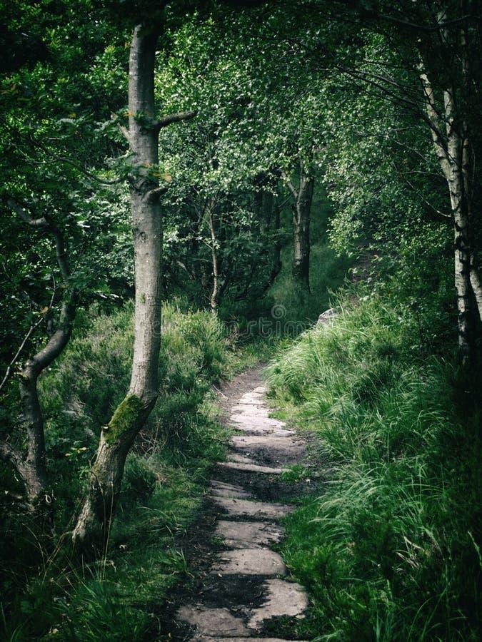 黑暗的森林路在密集的厚实的森林地 库存照片