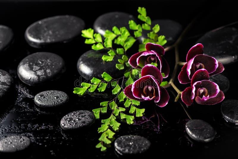 黑暗的樱桃兰花花和蕨枝杈的美好的温泉概念 免版税库存照片