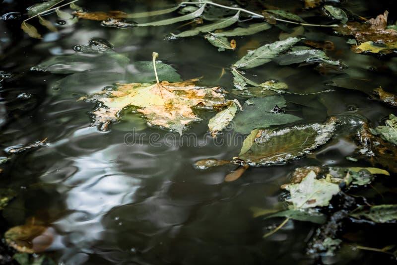 黑暗的水表面上的秋叶在多雨weather_的 库存照片