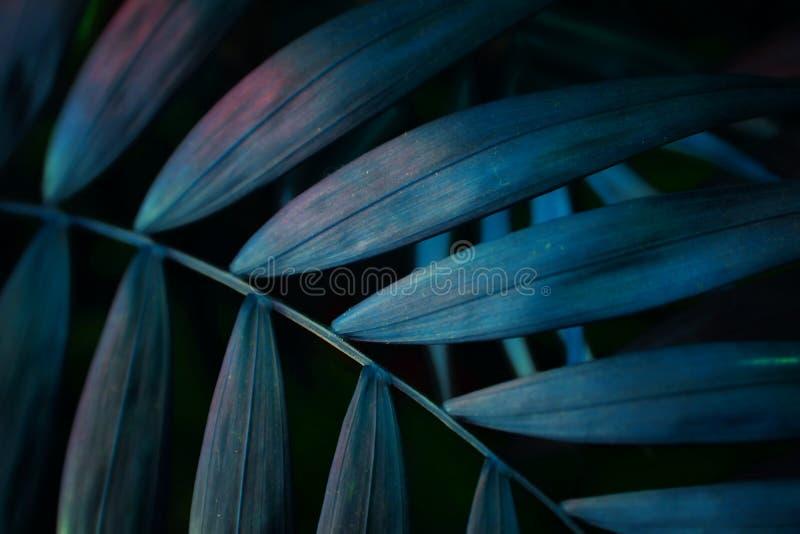 黑暗的绿松石背景影响由热带棕榈叶做成 库存图片