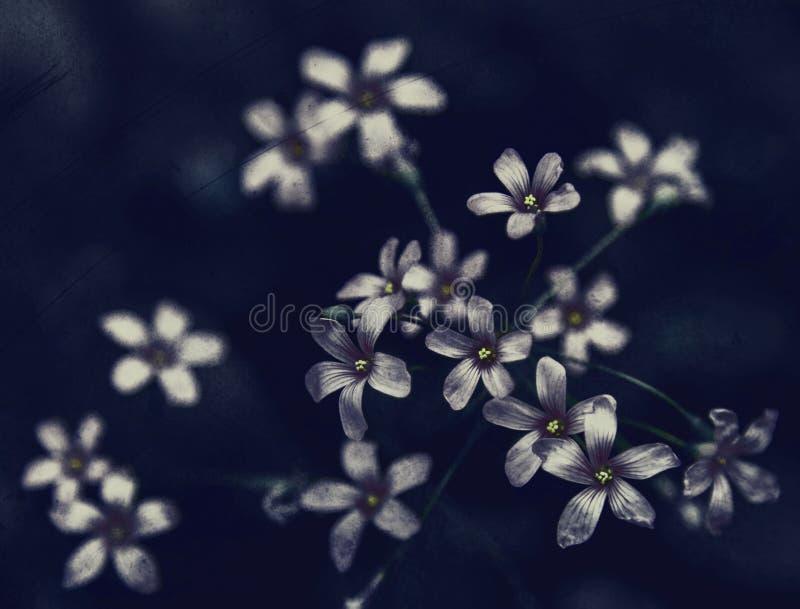黑暗的花 库存照片