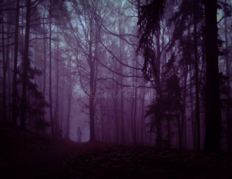 黑暗的蠕动的有雾的森林 库存照片