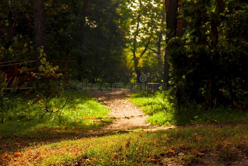 黑暗的阴沉的风景-森林道路 免版税库存图片