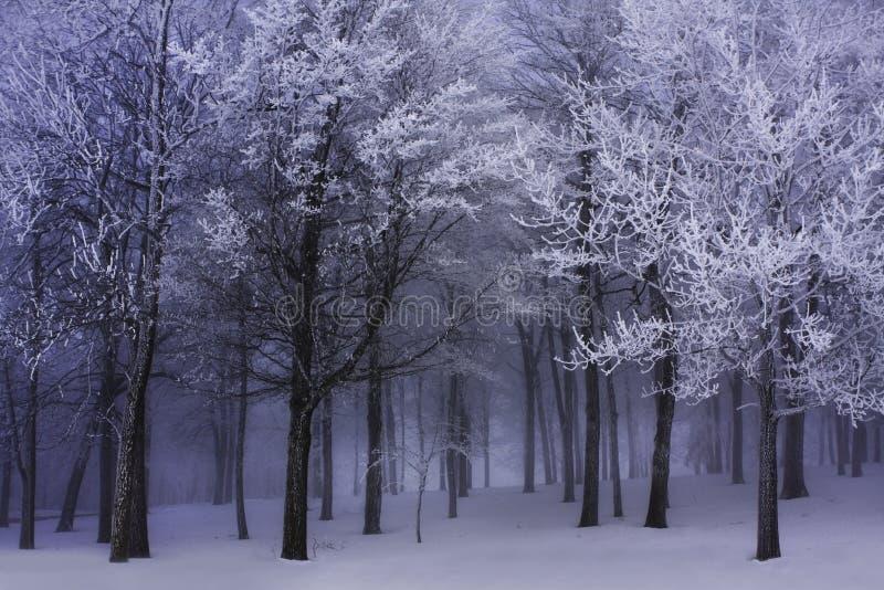 黑暗的雾森林冬天 库存照片