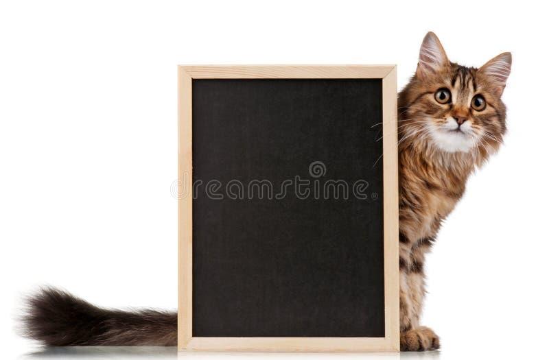 黑板猫 免版税库存图片