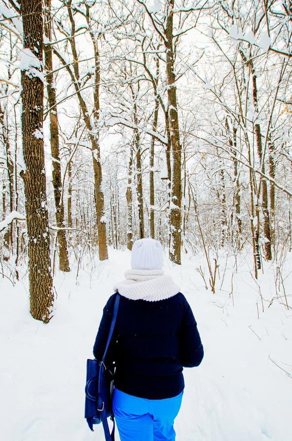 黑森林照片结构白色冬天 图库摄影
