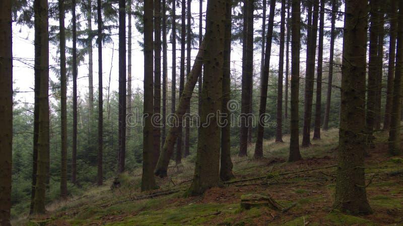 黑森林 库存照片