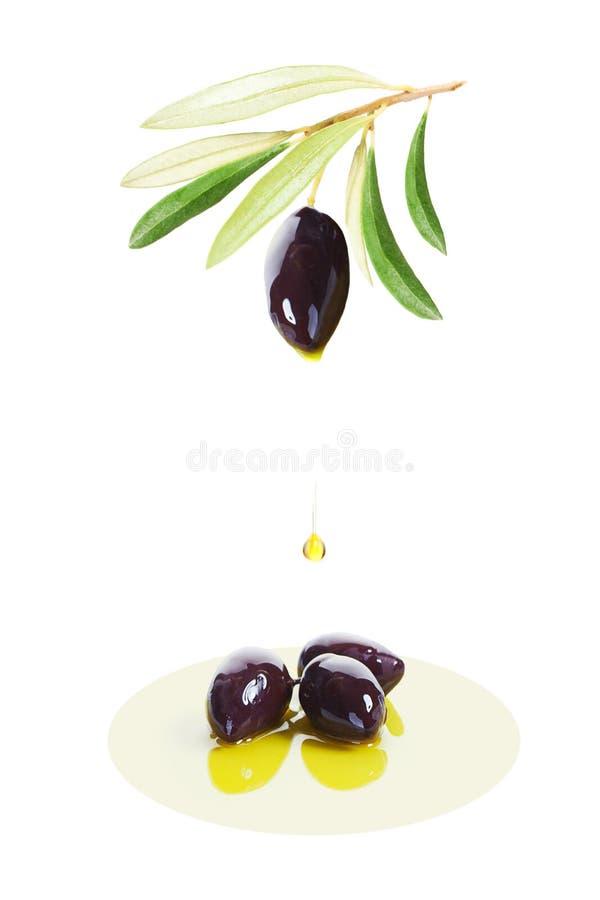 黑橄榄果子和生物橄榄油下跌的下落在Wh的 库存图片