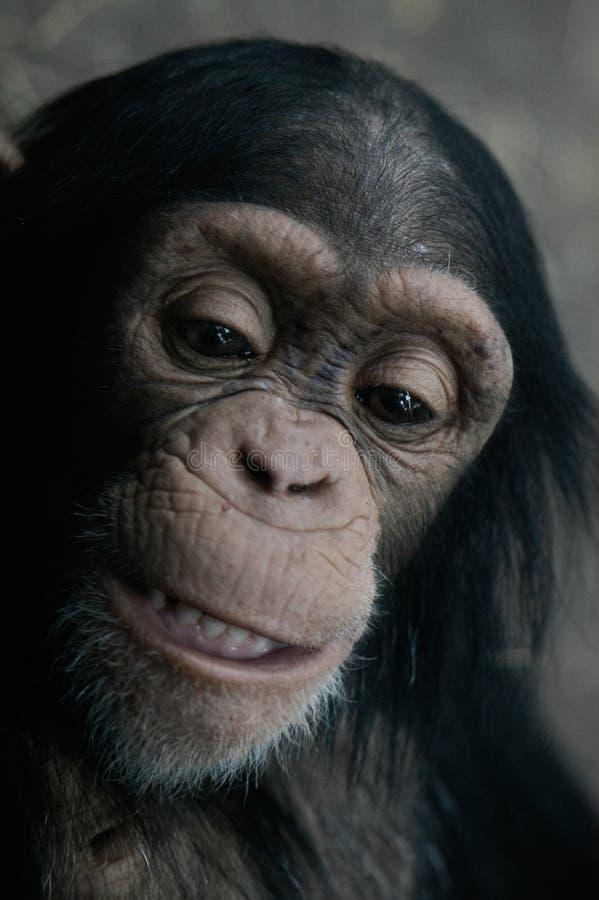 黑猩猩平底锅穴居人 免版税库存照片