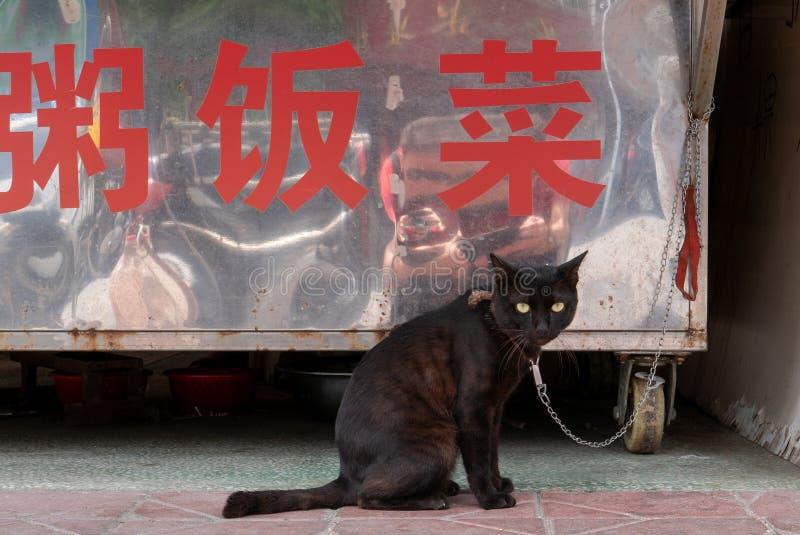 黑猫 库存照片