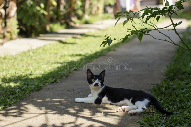 黑白幼小猫放下在树荫下 免版税库存图片