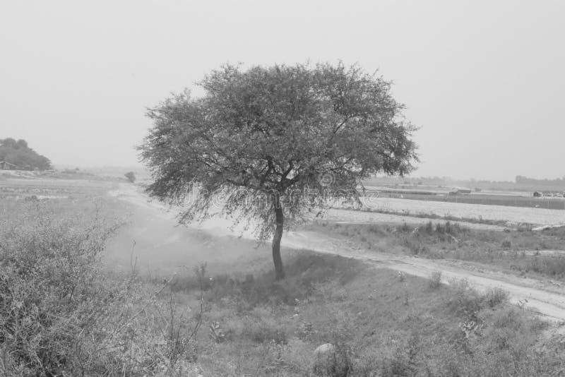 黑白树 免版税库存图片