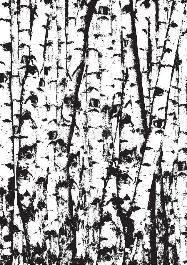 黑白桦树tunks的现实传染媒介例证 图库摄影