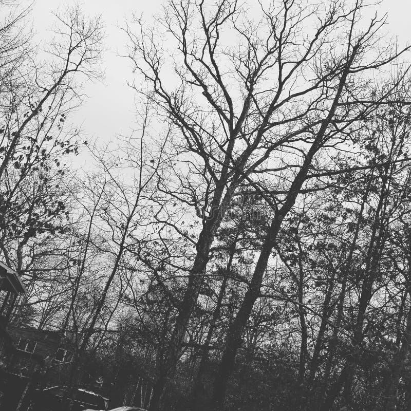 黑白森林 免版税库存图片