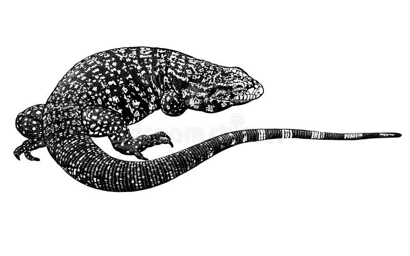 黑白爬行动物 查出的蜥蜴 也corel凹道例证向量 皇族释放例证