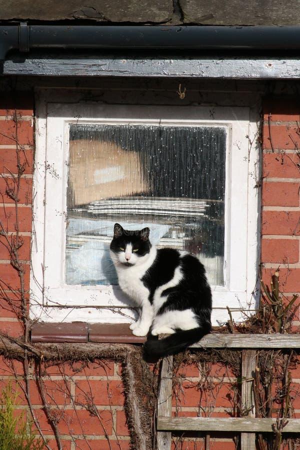 黑白猫坐在太阳的窗台 库存图片