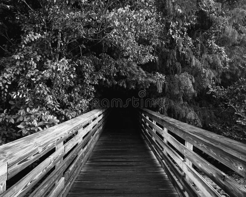 黑白的木板走道 图库摄影