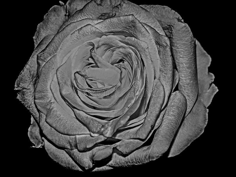 黑白罗斯花细节美好的凹道 库存照片