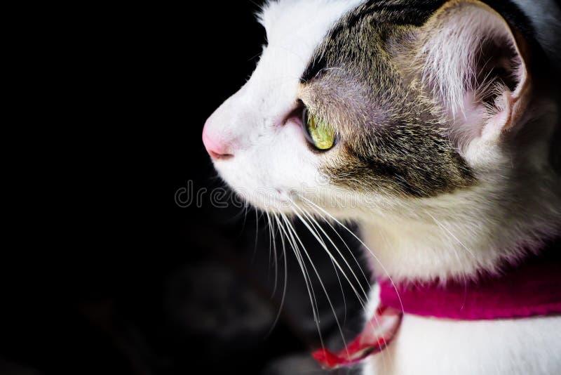 黑白色逗人喜爱的小猫接近的侧视图  宠物和生活方式概念 在黑暗的背景的可爱的蓬松猫 免版税库存照片