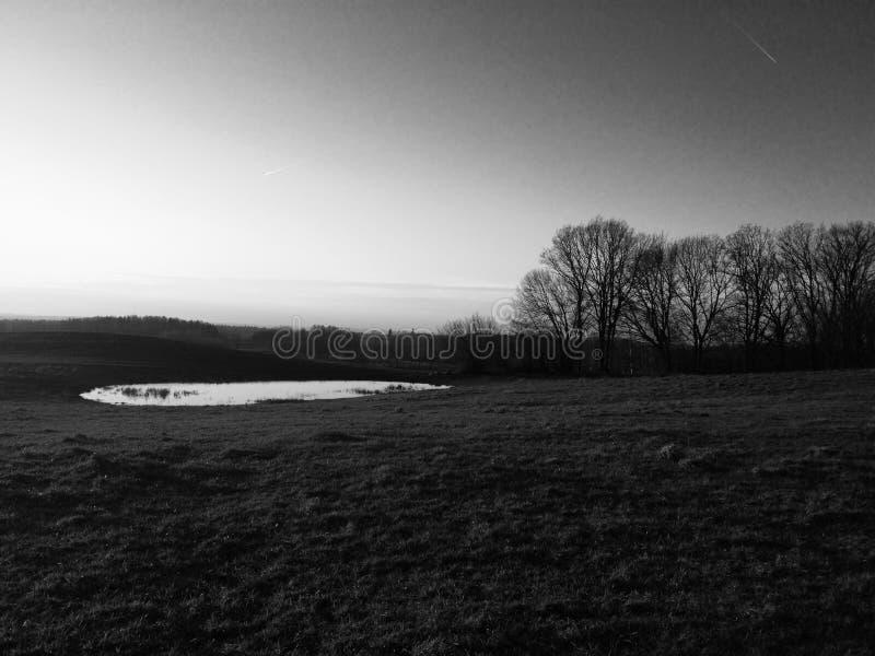 黑白色,自然,风景,水,树 免版税库存照片