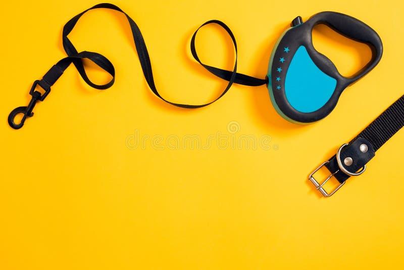 黑皮革在黄色背景附有的狗项圈和蓝色皮带 顶视图 免版税库存图片