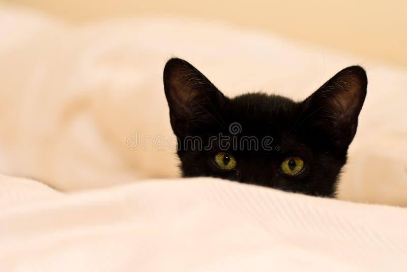 黑眼睛小绿色的小猫 免版税库存图片
