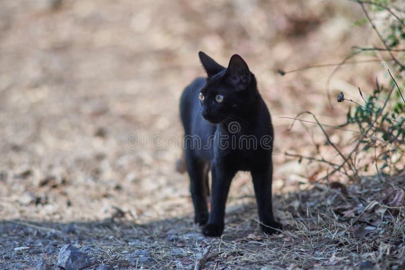 黑离群猫小猫画象 免版税库存图片