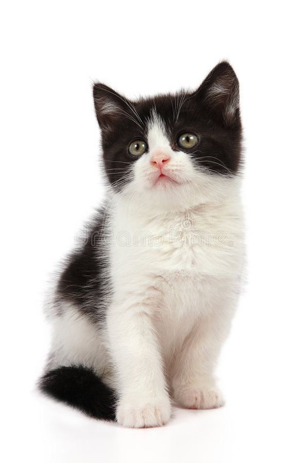 黑色小猫空白的一点 库存图片