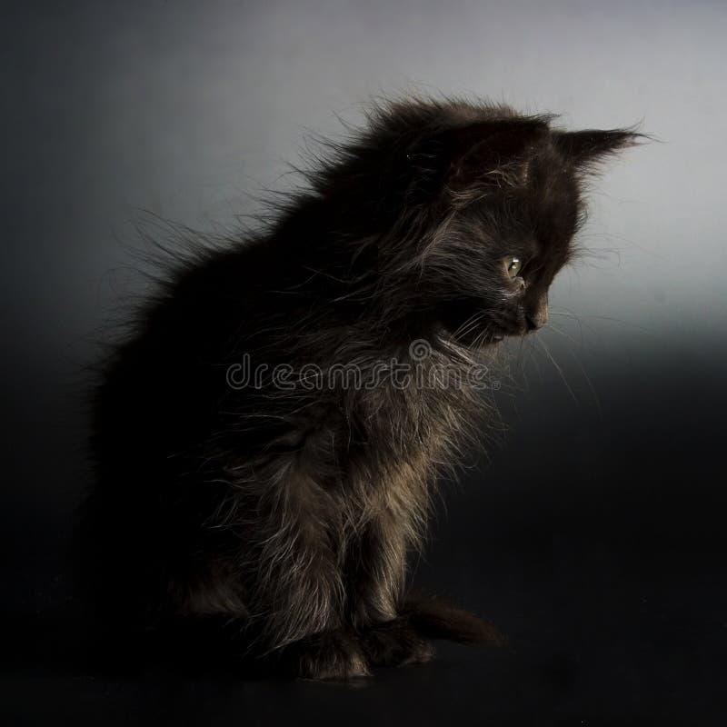 黑色小猫 免版税库存照片