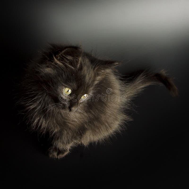 黑色小猫 库存图片
