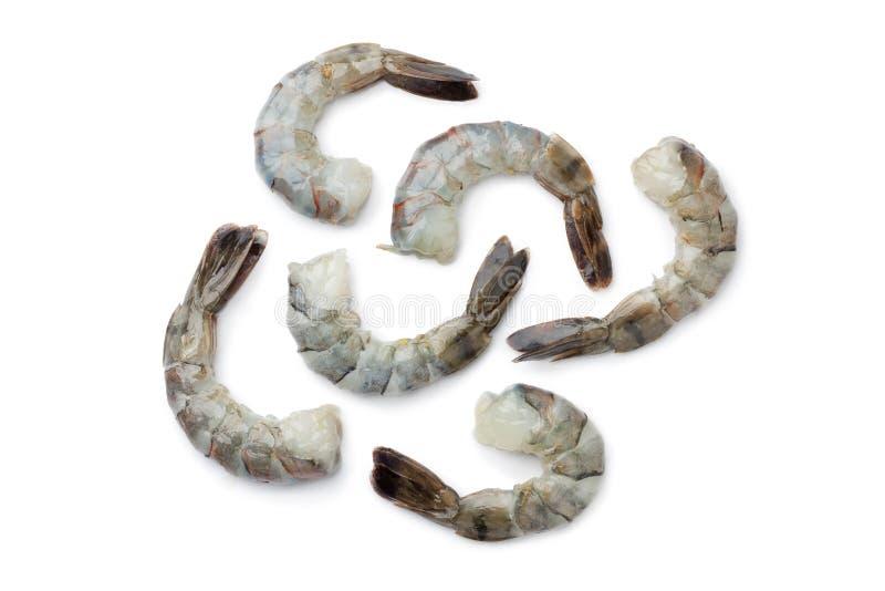 黑色新鲜的虾盯梢老虎 库存图片