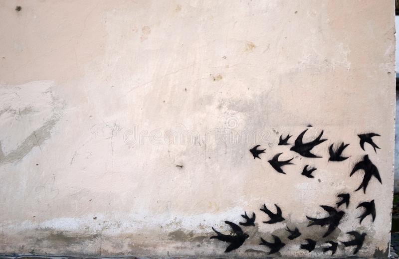 黑色燕子 免版税库存照片