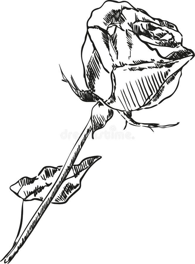 黑色玫瑰isolatwd 皇族释放例证