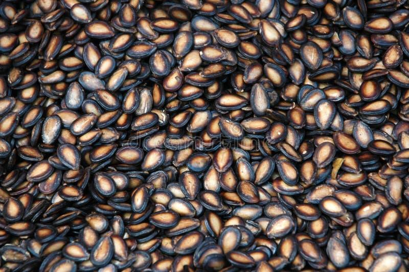 黑色瓜种子 免版税库存照片