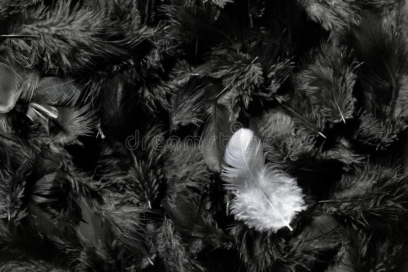 黑色用羽毛装饰白色 免版税库存图片