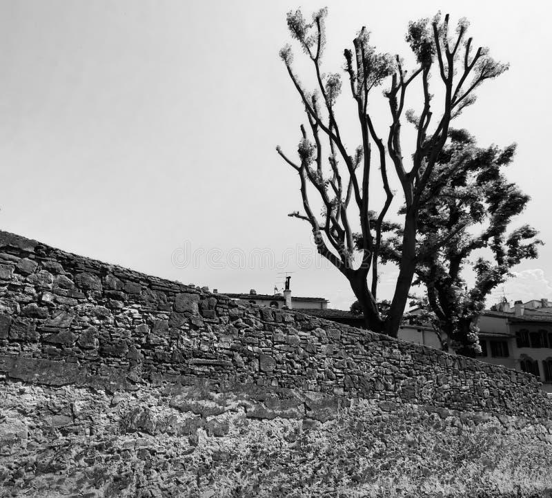 黑色白色 在墙壁上的脊椎 库存图片