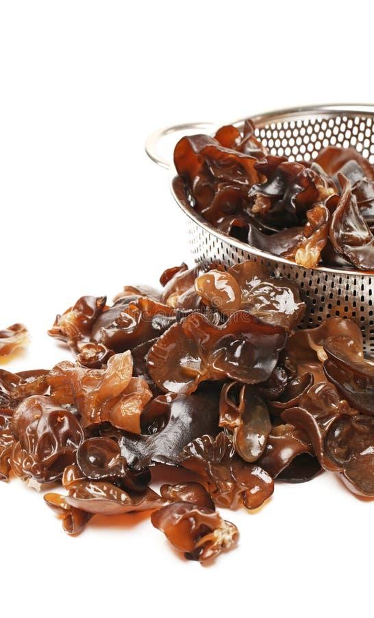 黑色真菌 图库摄影